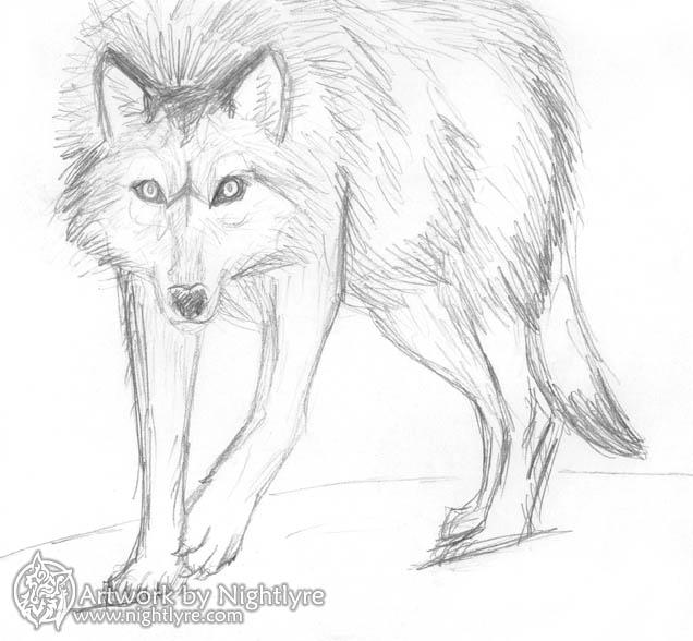 Wolf sketch with very ...
